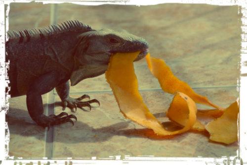 It's mango season, baby!