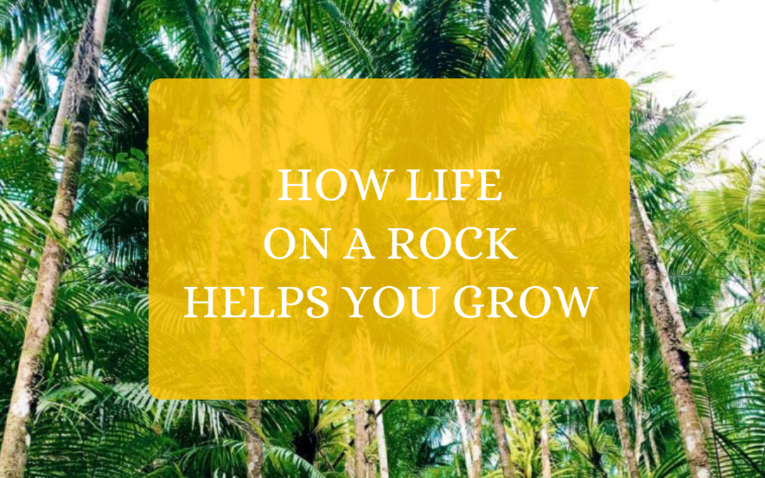 How Life On A Rock Helps You Grow
